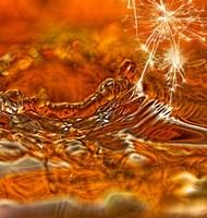 Spark Of Honey Fine Art Print