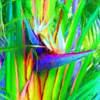 Bird of Paradise 1 Fine Art Print