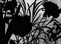 Carnation Creation E Fine Art Print