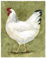 Chicken Scratch II Framed Print