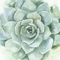 Verdant Succulent I Fine Art Print