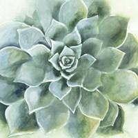 Verdant Succulent II Fine Art Print