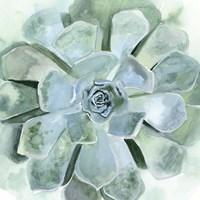 Verdant Succulent III Fine Art Print