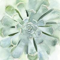 Verdant Succulent IV Fine Art Print