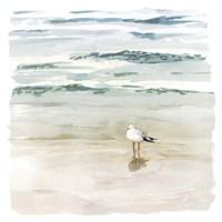 Seagull Cove II Fine Art Print