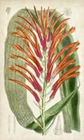 Tropical Gems VI Fine Art Print