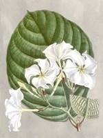 Alabaster Blooms I Fine Art Print