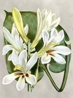 Alabaster Blooms IV Framed Print