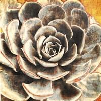 Echeveria Fine Art Print