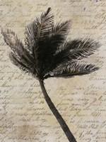 Palm Silhouette Fine Art Print