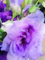 Purple Flower 1 Fine Art Print
