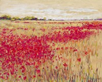 Poppies' Evening Light I Fine Art Print