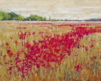 Poppies' Evening Light II Fine Art Print