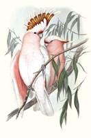 Pastel Parrots I Fine Art Print