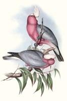 Pastel Parrots III Fine Art Print