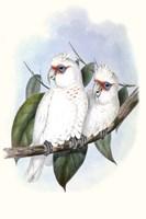 Pastel Parrots IV Fine Art Print