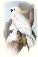 Pastel Parrots V Fine Art Print