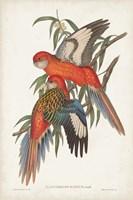 Tropical Parrots I Fine Art Print
