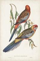 Tropical Parrots II Fine Art Print