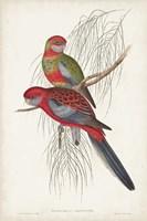Tropical Parrots III Fine Art Print