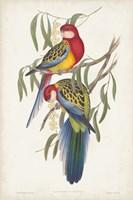 Tropical Parrots IV Fine Art Print
