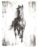 Rustic Black Stallion I Fine Art Print