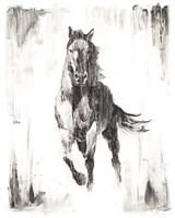 Rustic Black Stallion II Framed Print