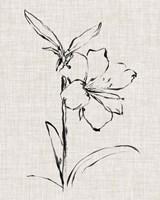 Floral Ink Study I Framed Print