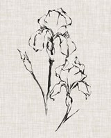 Floral Ink Study II Fine Art Print