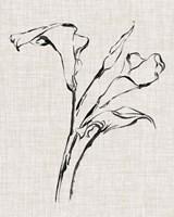 Floral Ink Study IV Framed Print