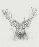 Contemporary Elk Sketch I Fine Art Print