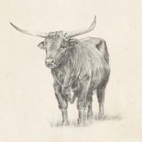 Longhorn Steer Sketch I Framed Print