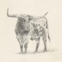 Longhorn Steer Sketch II Fine Art Print