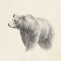 Western Bear Study Fine Art Print