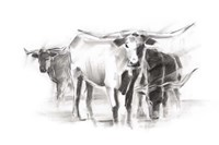 Contemporary Cattle II Framed Print