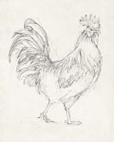 Rooster Sketch I Fine Art Print