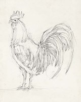 Rooster Sketch II Fine Art Print
