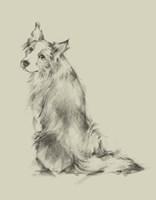Puppy Dog Eyes VI Fine Art Print