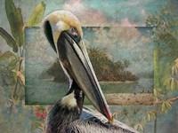 Pelican Paradise II Fine Art Print