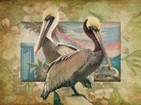 Pelican Paradise IV Framed Print