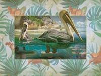 Pelican Paradise V Framed Print
