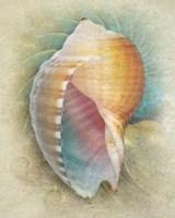 Aquatica III Framed Print