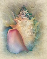 Aquatica IV Fine Art Print