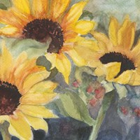 Sunflowers in Watercolor II Fine Art Print