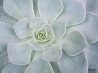 Storybook Succulent I Framed Print