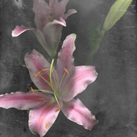 Fleur de Lys I Framed Print