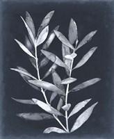 Midnight Leaves II Framed Print