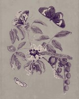Nature Study in Plum & Taupe II Fine Art Print
