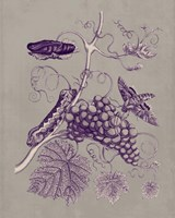 Nature Study in Plum & Taupe III Fine Art Print