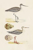 Sandpipers & Eggs I Framed Print